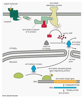 mol bio fig 1