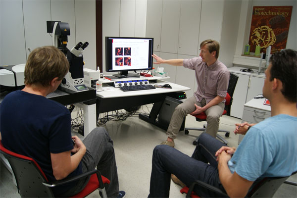 Testing of the super-resolution microscope Leica TCS SP8 STED 1