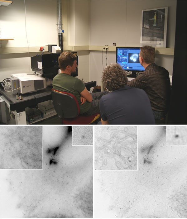 Testing of the super-resolution microscope Zeiss Elyra PS1