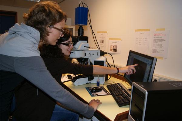 Upright fluorescence microscope Olympus BX53