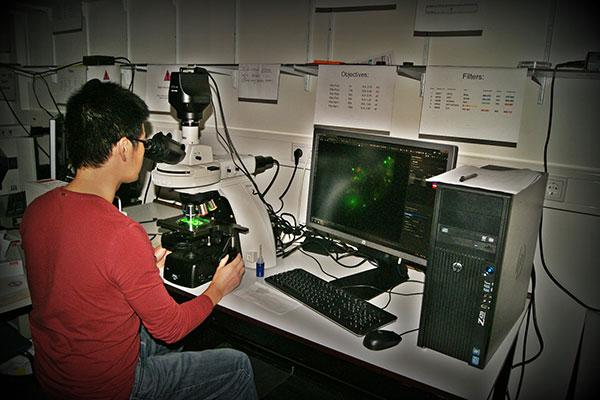 Upright FL microscope Nikon Eclipse Ni